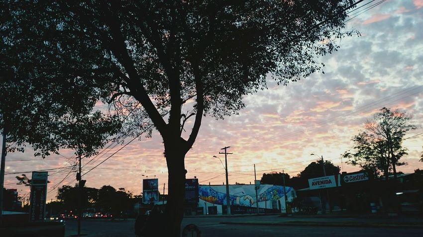 City Sunset Tree Sky Paraguay ♥ Paraguay-Asuncion Paraguayenfotografias Paraguayenfotos