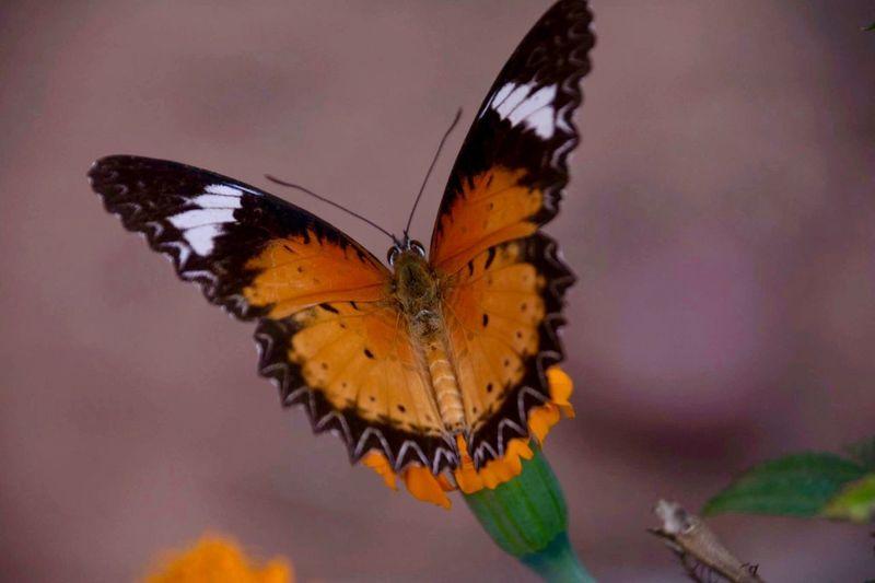 Invertebrate Insect Animal Themes Animal Wildlife Animal Butterfly - Insect Animals In The Wild