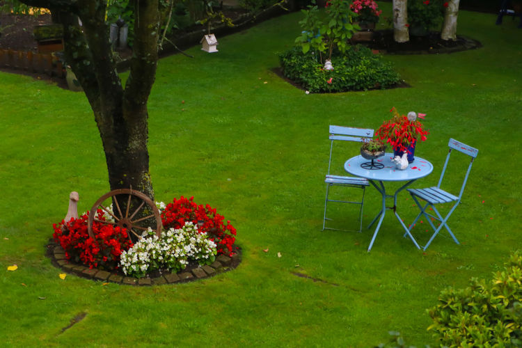 Garden view Beauty In Nature Chair Day Flower Flowerbed Food Freshness Front Or Back Yard Garden Grass Green Color Growth Lawn Nature No People Outdoors Place Setting Plant Plate Red Table Tablecloth Tree Vase Wineglass