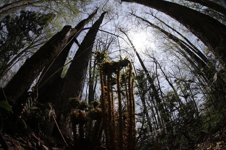 背伸び~😆 一目惚れんず Tree Tree Area Forest Tree Trunk Branch Sky Pine Tree WoodLand