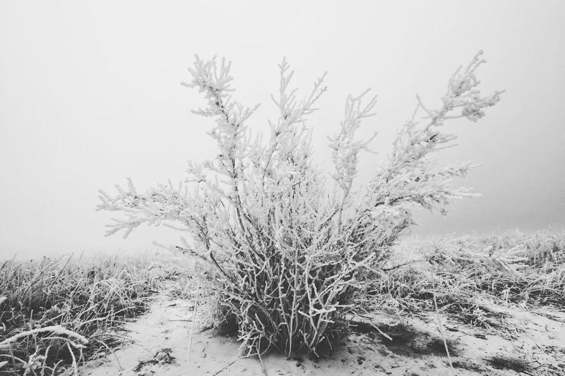 """""""Only do what your heart tells you."""" Nature Plant Winter Cold Temperature Field Rural Scene Outdoors Tree Beauty In Nature Landscape Frost Colorado Springs Colorado Blackandwhite Black&white Blackandwhitephotography Black And White Photography Black And White"""