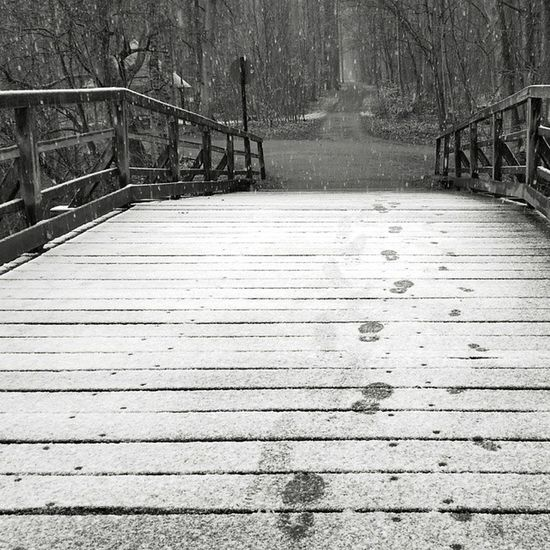 Snow Snowing Winter Cold nature snowflakes instagood instawinter instasnow photooftheday snowfall schnee blackandwhite s5