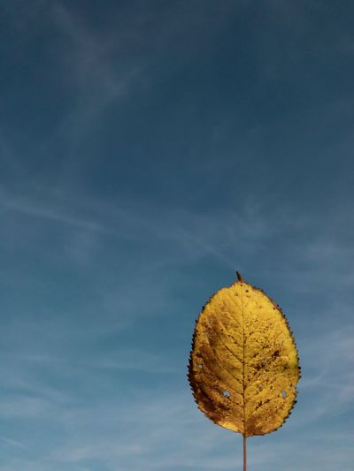 Low angle view of dry leaves against sky