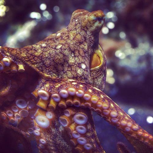 Octopus HDR Monterey Bay Aquarium Ocean