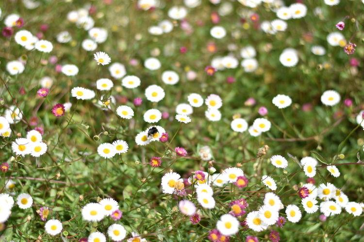 Flowering plants growing on field