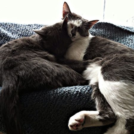 Brothers. Cat Hello World Enjoying Life Hanging Out