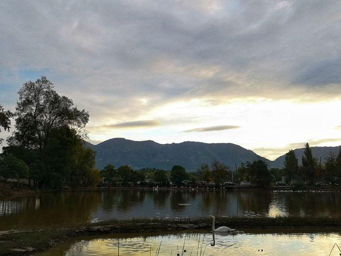 Duck Autumn