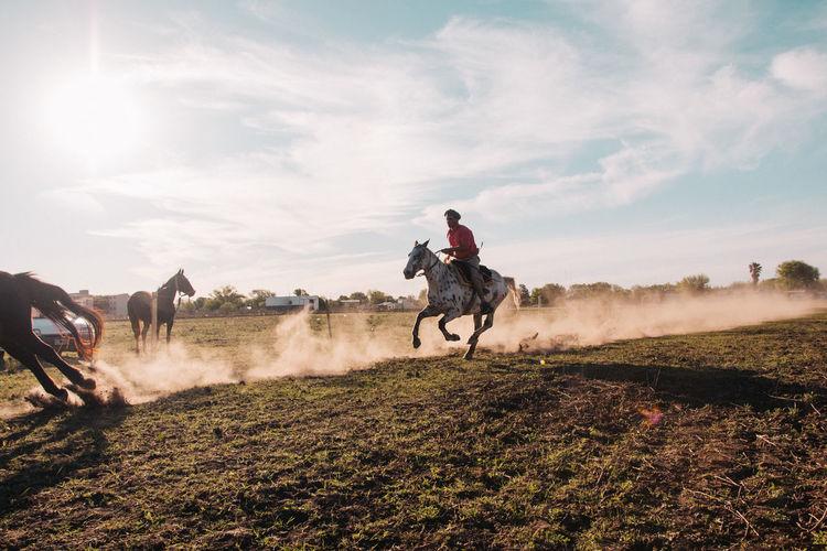 Speed horse farmer animals field