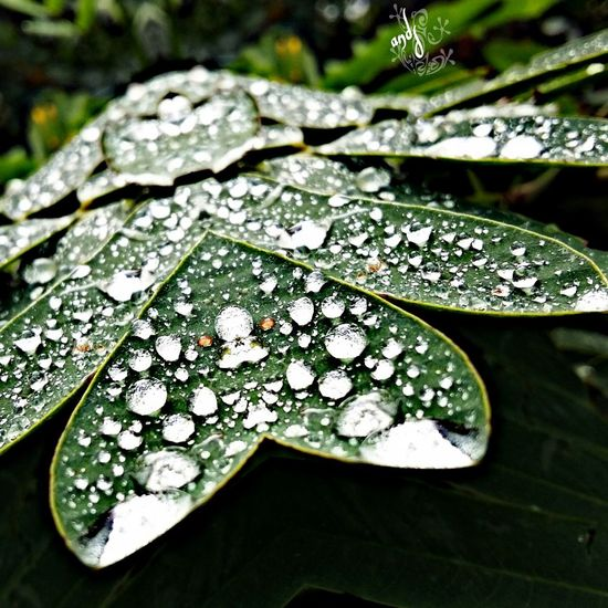 Mi Amor ♥ natureza Natureza 🐦🌳 chuva paixão Curti Ai instagram Secret Garden Avare SP BRASIL 🇧🇷☀️ First Eyeem Photo lindas Foto watssap 27988106481 Instagram Mumuzinho Mexico dedico a todas as mulheres