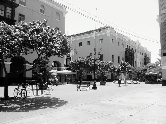City Street PlazaDeArmasDeLima Black And White Building Exterior Built Structure Architecture Tree Outdoors No People City Nature Day