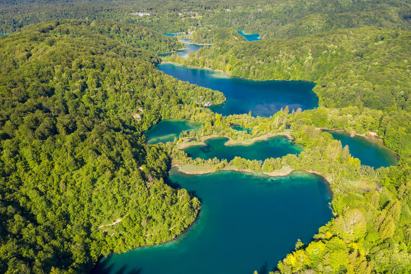 High angle view of trees by lake