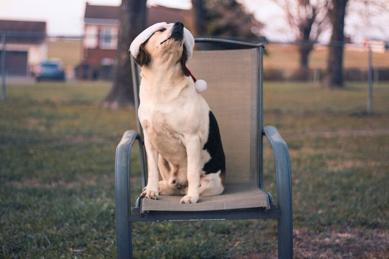 Close-up of dog wearing santa hat sitting on chair at field
