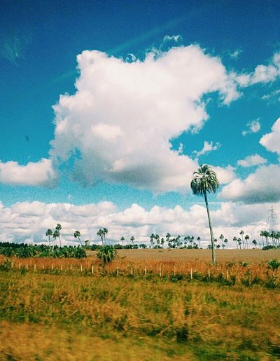 🌴🌴🌴 Palms Sky Shot Landscape Clouds Enjoy Life