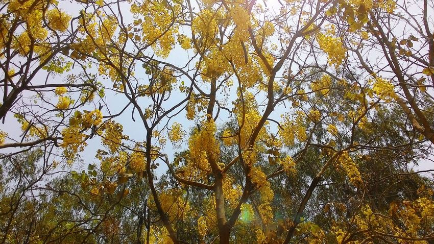 EyeEm Colors Of Nature Beauty In Nature Colors Nature Yellow Flower