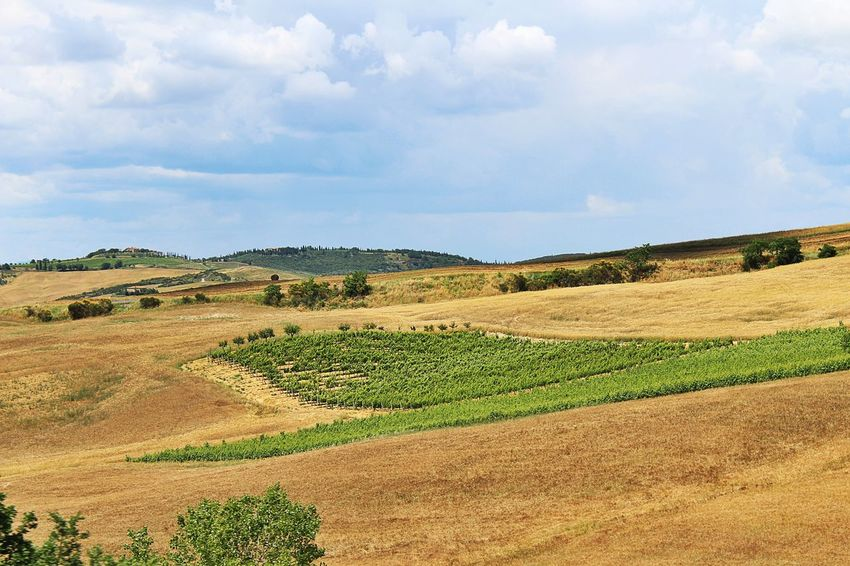 Fields and vineyards in Tuscany Agriculture Beauty In Nature Field Grass Green Color Idyllic Italy Landscape Landscape_Collection Landscape_photography Nature Non-urban Scene Outdoors Rural Scene Scenics Siena Sky Tranquil Scene Tranquility Tuscany Vineyard Vineyards