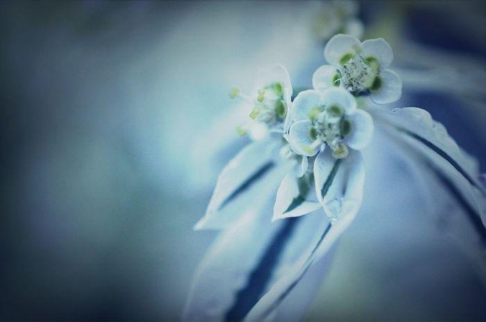Macro Macro Photography 雨のあと Nature_collection