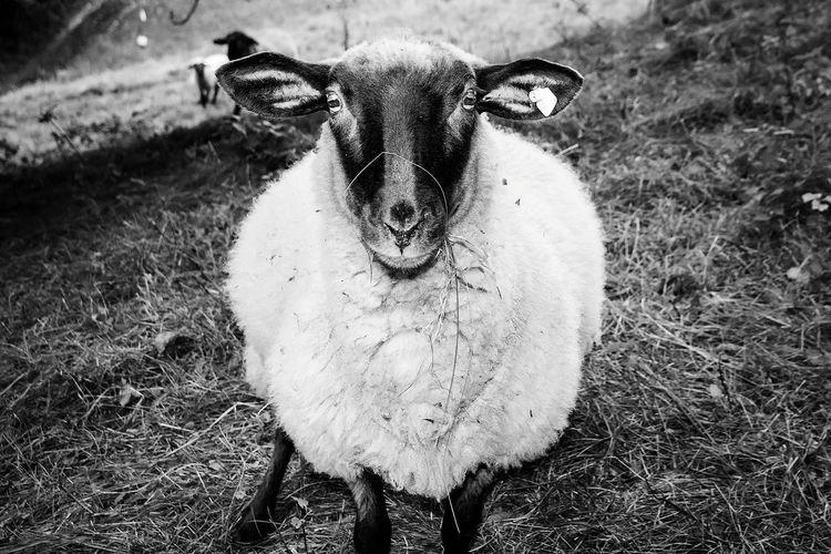 Capture The Moment Blackandwhite Animal Photography EyeEm Nature Lover Portrait