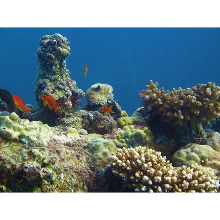 تصويري  عدستي جده جدة تحت_البحر غوص مجموعة_الغطاس_الصلب كانون Jeddah Diving Diver Dive Underwater Canon_g16 Hard_diver_group