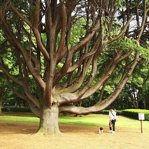 砧公園 Japan Tokyo Setagaya Kinuta Park Park Tree Green Lawn Kids Father Nature Landscape Outdoors Beauty In Nature The Great Outdoors - 2016 EyeEm Awards