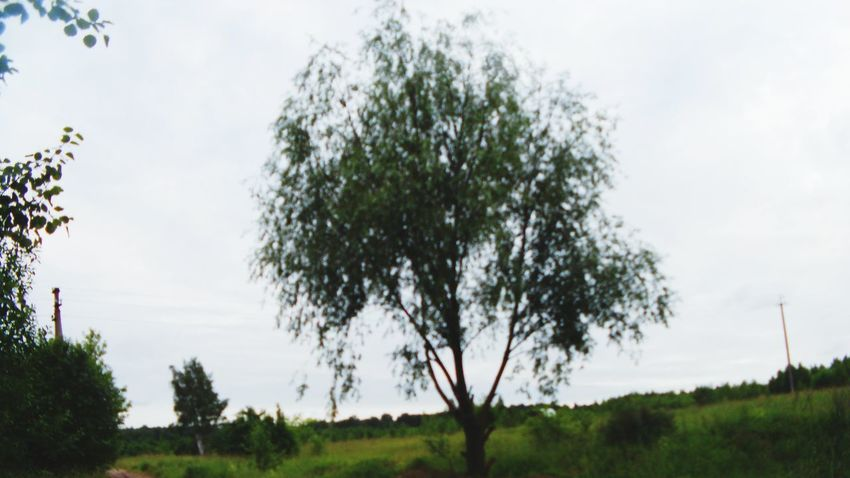 Nature дерево Кузьма