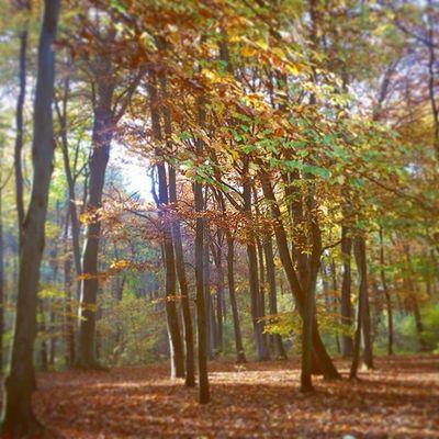 Herbst Herbstfarben Herbstspaziergang Stever Haltern Halternamsee