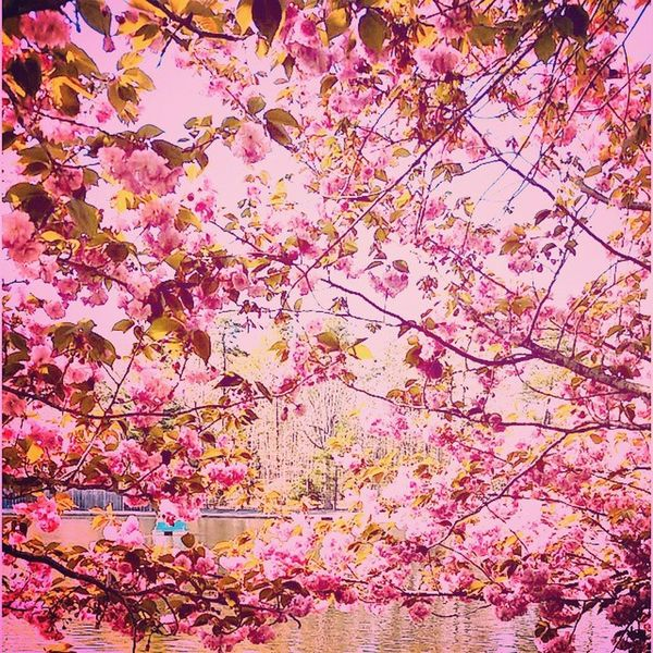 Spring colors have always put a smile on my face . 😆🌸🌹 Spring Sprung Springhassprung Happiness colorful mystory114 smithville pink pinkflowers trees nature godswork jersey beautiful water earth earthling backtoearth newjersey prudy makesbaddaysbetter