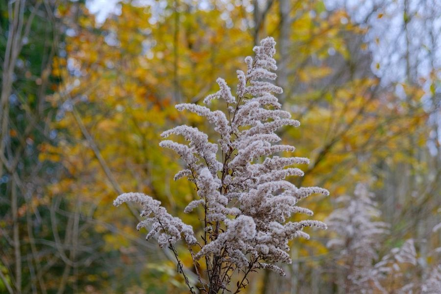 Plant Beauty In Nature Focus On Foreground Close-up Fragility Selective Focus Outdoors Nature No People Day