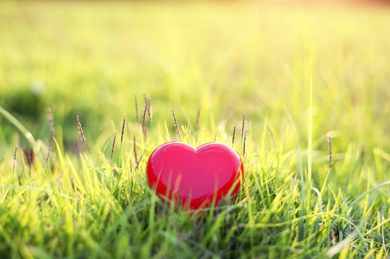 Close-up of heart shape on grass