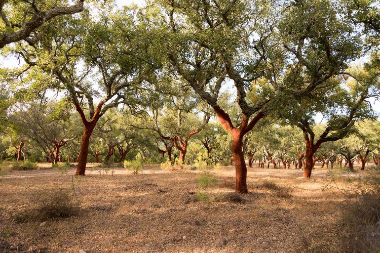 Tree Outdoors
