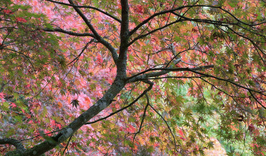 Westonbirt Autumn Display Autumn Beauty In Nature Branch Freshness Leaf Nature Outdoors Tree