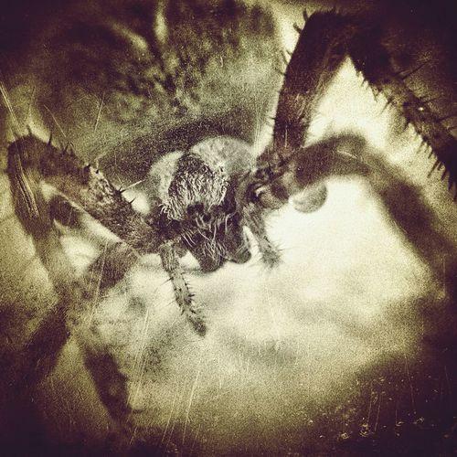 Grungebug Spider Horror In Nature Olloclip