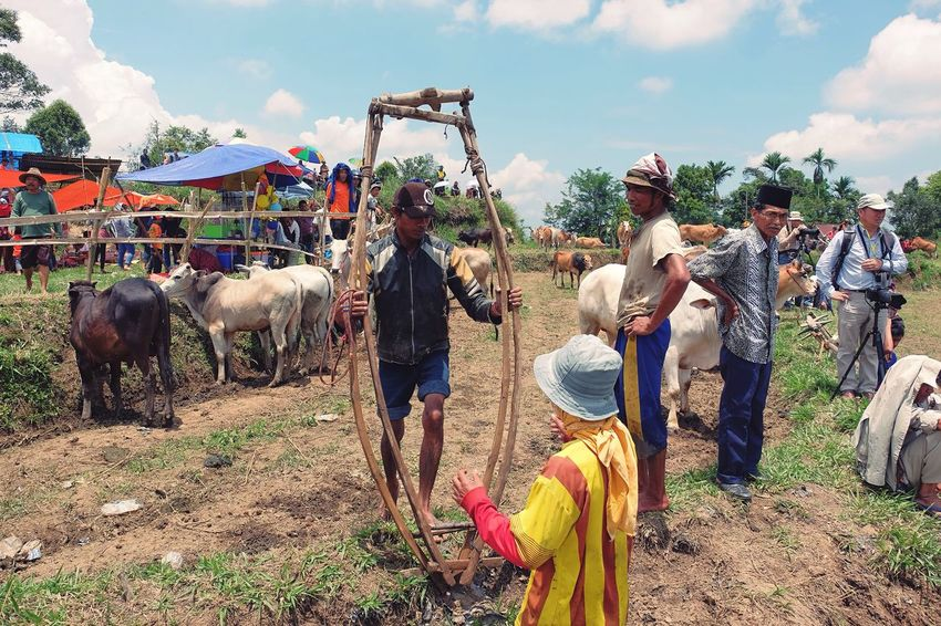 Preparing pacu jawi Travel West Sumatera Padang Check This Out Cowboy Traditional Paddy Field Arena Pacu Jawi