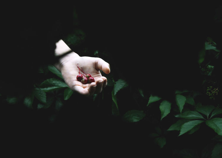 Cropped Hand Of Man Holding Fruits Against Plants