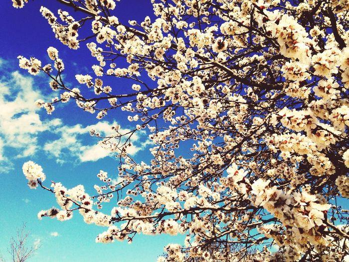Sunshine Flowers Blue Sky Spring Erzincan Turkey First Eyeem Photo