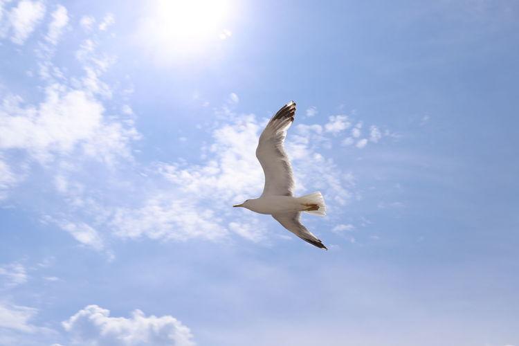 Чайка🤗 EyeEm Selects Bird Spread Wings Flying Mid-air Seagull Sky Cloud - Sky Bird Of Prey Vulture Hawk - Bird Eagle - Bird Animal Wing Bald Eagle Beak Butterfly - Insect Falcon - Bird Dragonfly Perching Pelican Moth Damselfly Kingfisher Hornbill Flapping Owl Shining Prey Feather  Hawk