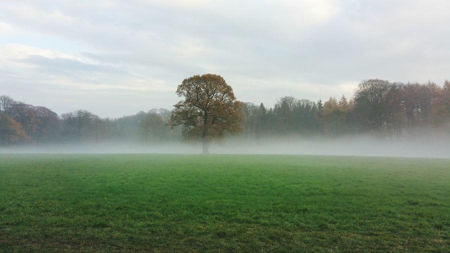 Tree fog. Tree And Sky Fog