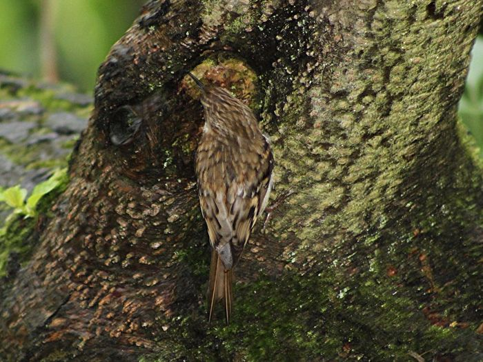 Tree Creeper Forest Floor Countryside Bird Photography Birds Of EyeEm  Wildlife Photography Wildlife Birds Nature_collection Naturelovers Springwatch