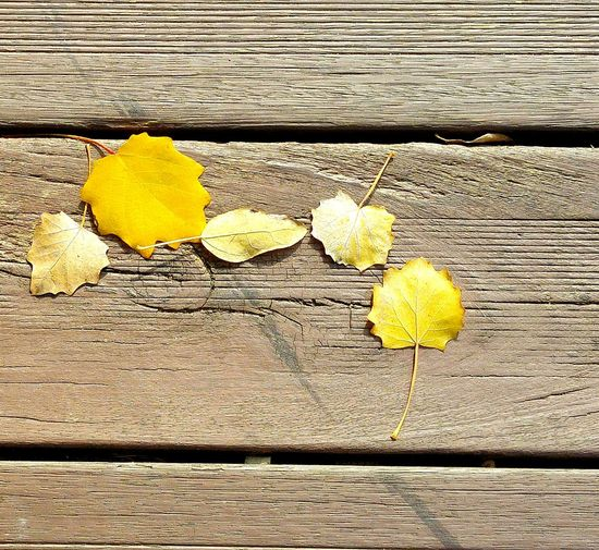 Otoño Hojas Autumn Colours Hojas De Otoño Tree Fall Autumnbeauty Leaves_collection Hojas Secas Autumncolors Leaves Falling Colour Of Life Leaves🌿 Leaves No People Wood Madera Madera Vieja