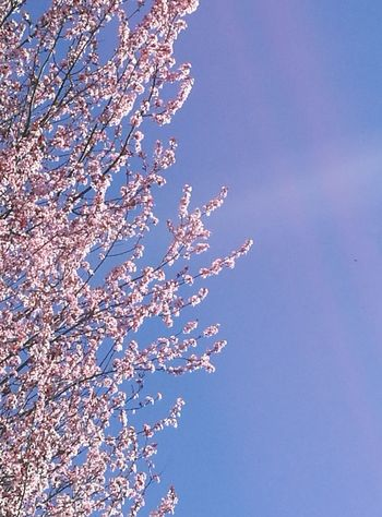 Spring Flowers Bird Blue Clear Sky Flock Of Birds Sky