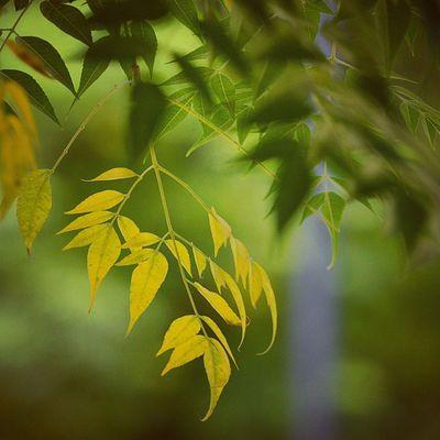 Gogreen Nature Love Instaludhiana