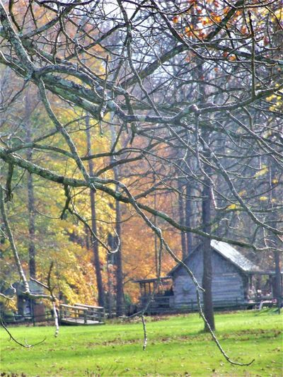 Cabin in Autumn Architecture Autumn Autumn Collection Autumn colors Autumn Leaves Fall Beauty Fall Colors Field Foggy Weather History Through The Lens  Indiana Log Cabin USA Autumn🍁🍁🍁 Cabin Cabin In The Woods Cabin Life Cabins  Fall Fall Leaves Fog Foggy Foggy Day Foggy Landscape Foggy Morning
