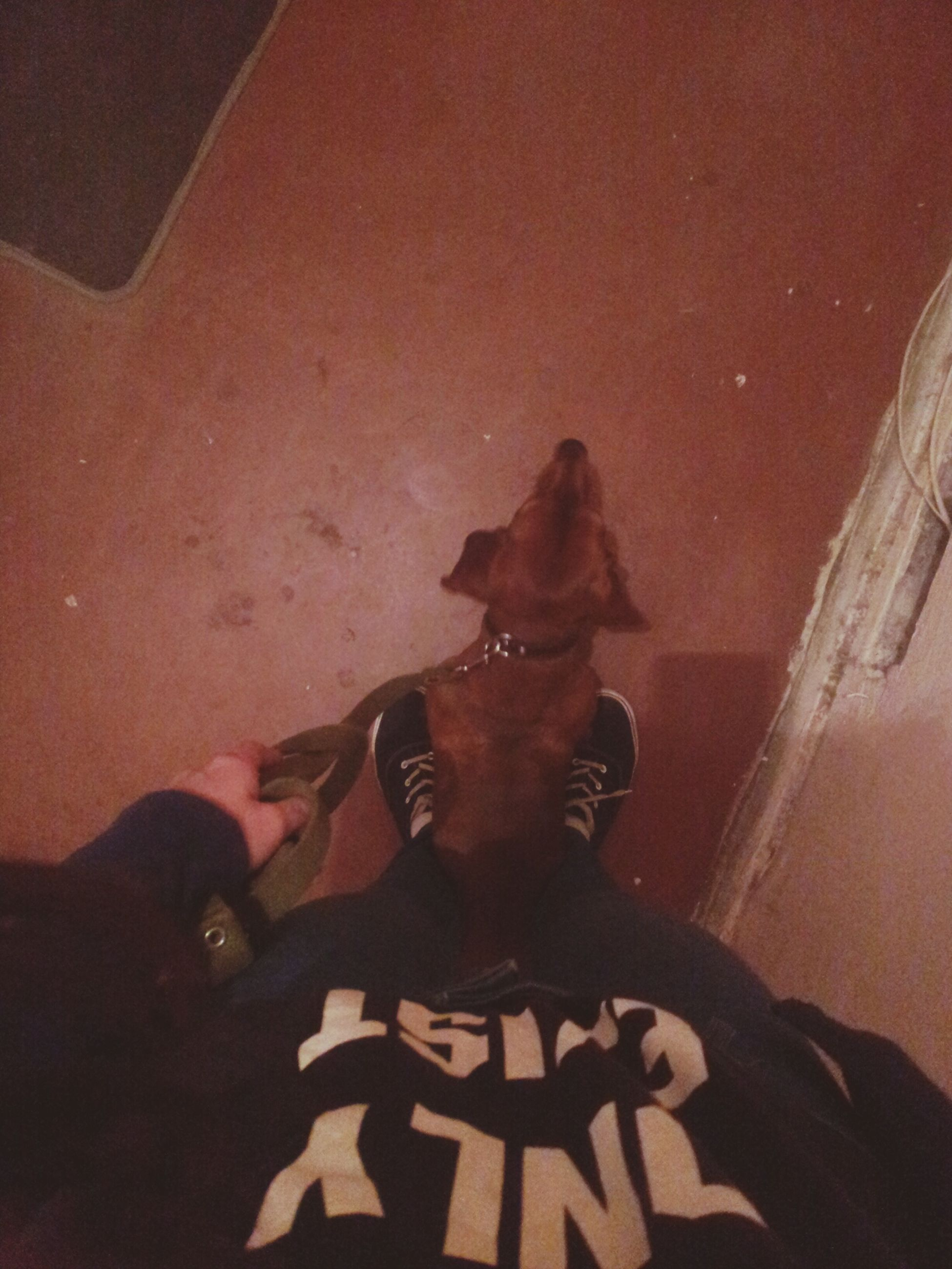 animal themes, mammal, domestic animals, pets, indoors, one animal, dog, low section, high angle view, lifestyles, personal perspective, person, relaxation, leisure activity, men, togetherness, shadow, unrecognizable person