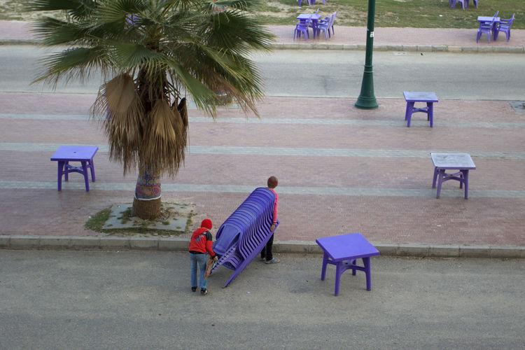 Egypt Chairs Purple égypte