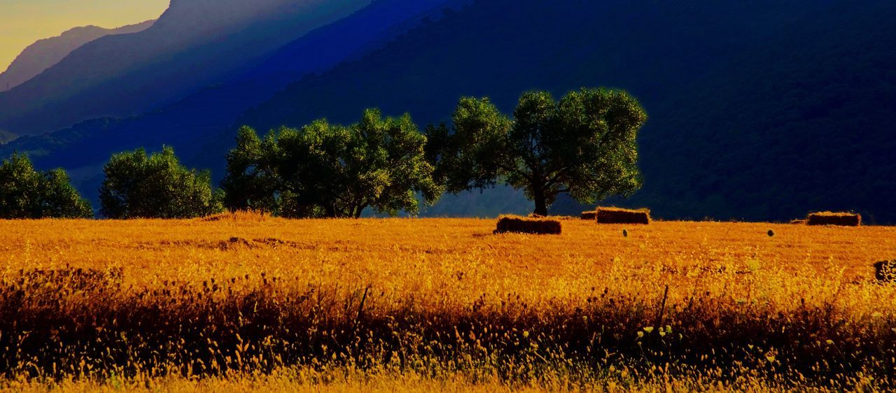 Harvest Time. Agriculture Andalucia Spain Beauty In Nature Day Field Grass Harvest. Jimera De Libar Landscape Mountain Nature No People Outdoors Rural Scene Scenics Sky Spain🇪🇸 Tree Perspectives On Nature