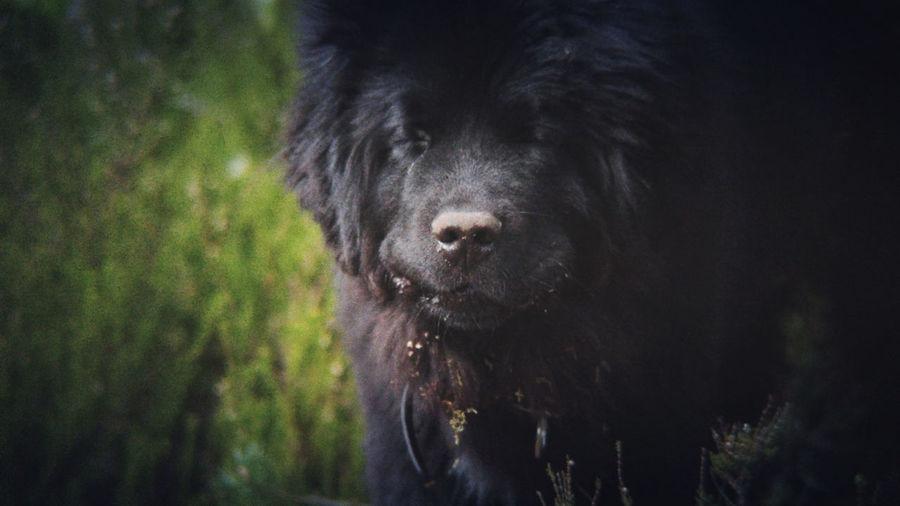 Sleeping Onni ©️JaniVauhkonen One Animal Domestic Animals Animal Themes Pets Outdoors BeastgripPro LG G4 EyeEm JaniVauhkonen Best Shots EyeEm BestofEyeEm