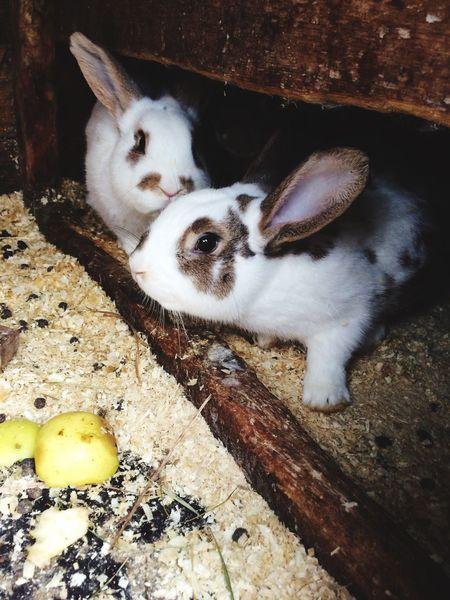 Rabbit 🐰