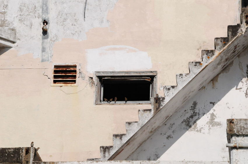Stairy Existence Abandoned Architecture Bad Condition Birds Building Exterior Built Structure Damaged Deterioration Door Exterior House Obsolete Old Ruined Wall Weathered Window