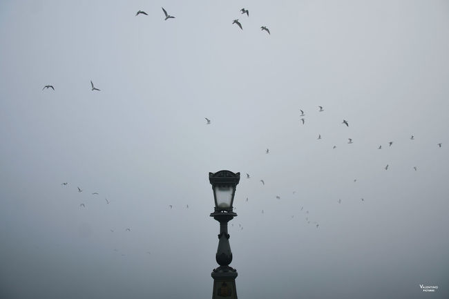#budapest #ChainBridge #cityscapes #foggy #minimalist #mistery #mistymorning #reportage #Winter Animal Themes Animal Wildlife Animals In The Wild Beauty In Nature Bird Day Flock Of Birds Flying Large Group Of Animals Low Angle View Nature No People Outdoors Sky