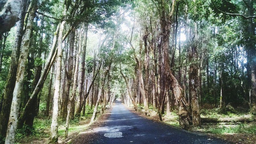 a peaceful ride between the tress Pure , Enchanting Just Natural