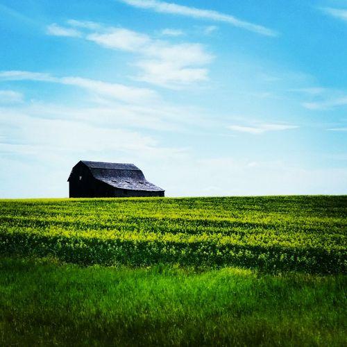 Near Drumheller Alberta Old Barn Prairie Grass Summer Views Blue Sky